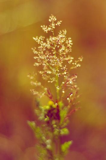 Fotoshoot in de natuur fotograaf Vught